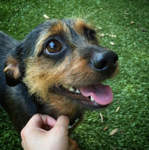 Cuteness at Lucas Garden Dog Park - St. Louis, MO - Angus Off-Leash #dogs #puppies #cutedogs #dogparks #stlouis #missouri #angusoffleash