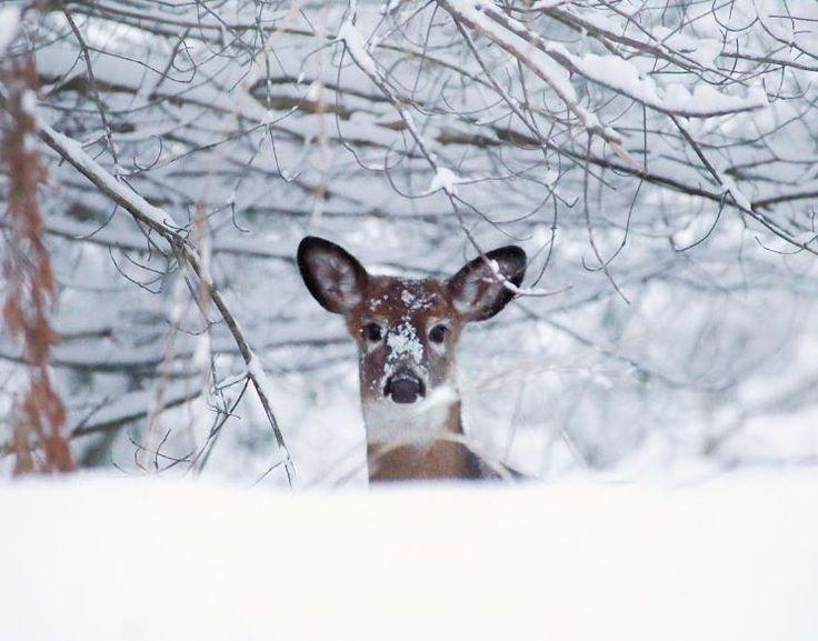 Surprise visitor. (Photo via Instagram: dirtandglass)