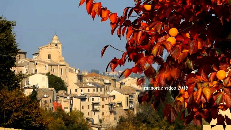 Ortezzano, with the Fall colored leaves of Japanese persimmon Diospyros ...