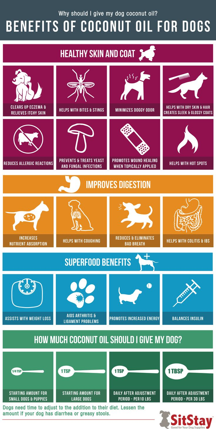 Why should you give your dog coconut oil? Because of all the amazing benefits! See our blog to get your free printable infographic will all of the amazing benefits listed.