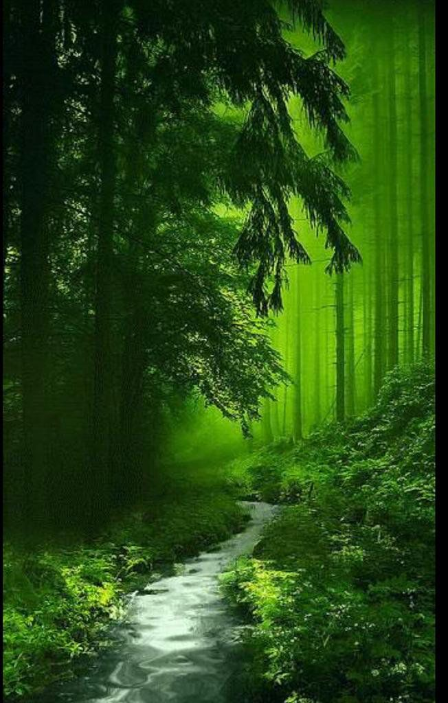 #fantasy #forest #green