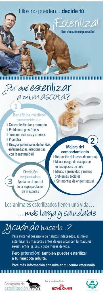 Campaña de esterilización del Colegio de Veterinarios de Zaragoza.
