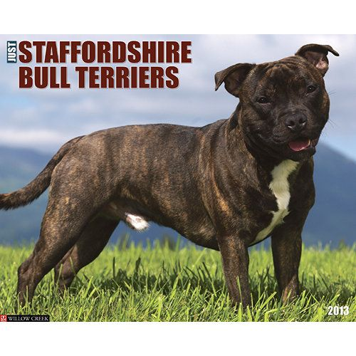 Just Staffordshire Bull Terriers Wall Calendar: While their muscular bodies make them look imposing, truth is that Staffordshire Bull Terriers are gentle, happy, obedient and terrific family members.  $13.99  http://calendars.com/Staffordshire-Bull-Terriers/Just-Staffordshire-Bull-Terriers-2013-Wall-Calendar/prod201300002887/?categoryId=cat10119=cat10119#