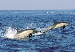 Dolphins of the Wild Coast - Eastern Cape  South Africa - SouthAfrica.info