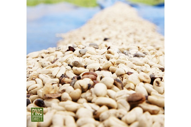 coffee parchment drying jiwaka province highlands pngdirect.com