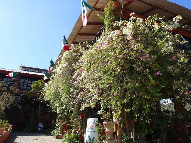 13 best puerto vallarta botanical gardens images on - Puerto vallarta botanical gardens ...