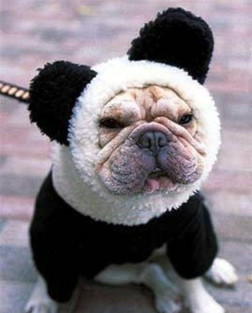 Not everyone is meant to be a panda. #halloween?