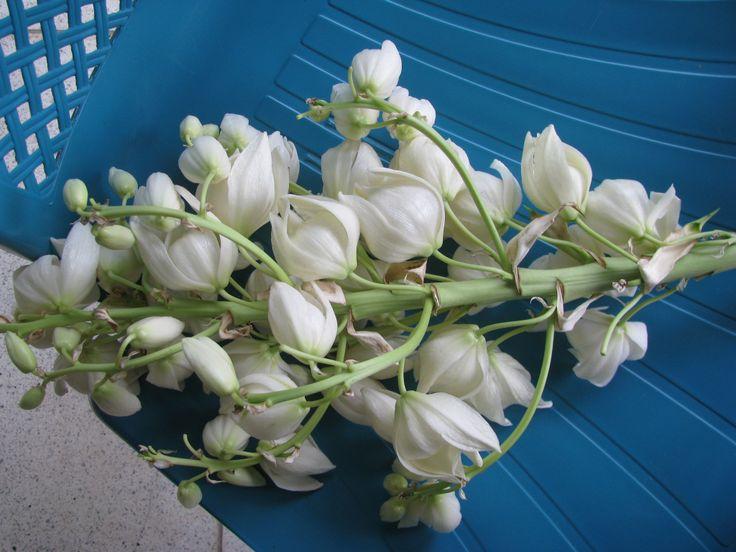 Ramo de Flor de Izote Yucca, Edible garden, Flowers