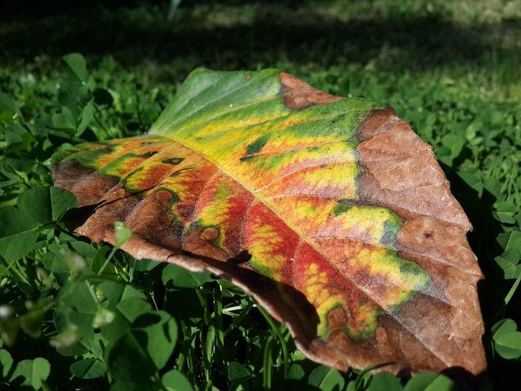 Colorful Leaf by Ειρήνη Μαυρή on 500px