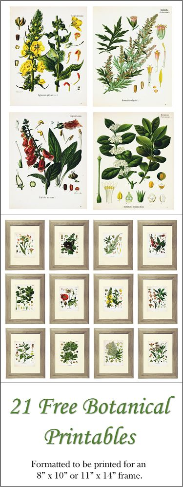 21 free botanical printables formatted to be printed for 8 x 10 or