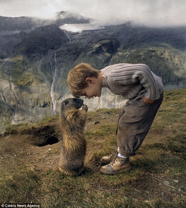 Nose to nose: A marmot greets eight-year-old Matteo on the slopes of the Austrian Alps -  how sweet!