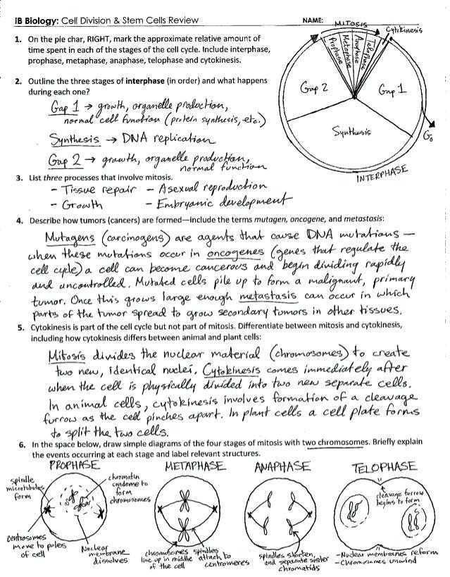 Cell Reproduction Worksheet Answers Along with Cell ...