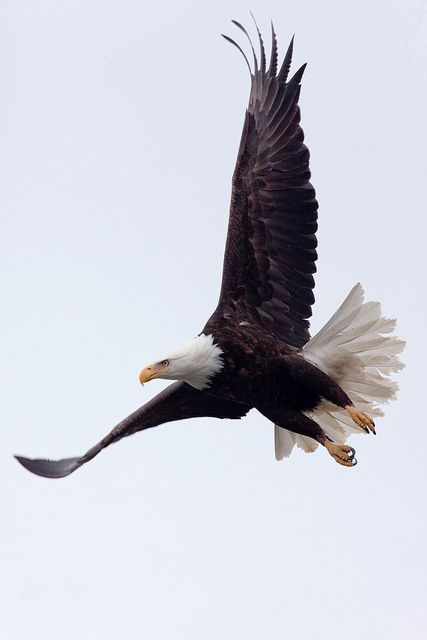 Let all those who love you be the wind beneath your wings Boy Scout! Fly higher and farther than you ever have before!