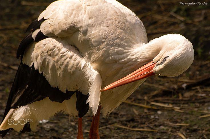 Stork - null