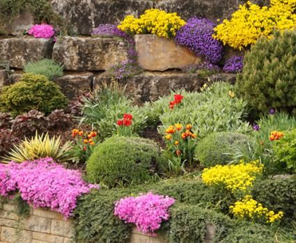 Best Plants For Rock Gardens Gardening Pinterest