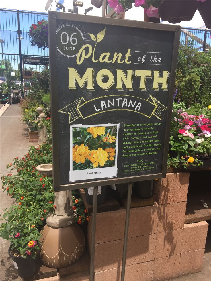 "Signs - Colorful, professional signage, creates sale section, provides ideas solutions and growing tips ""Lead the way."" Garden Center Magazine. N.p., 29 Sept. 2016. Web. 04 Feb. 2017."
