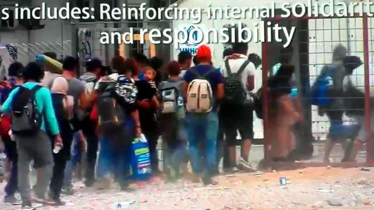 Uchodźcy! Po co sami sobie szkodzicie?? - Refugees! Why you are harming ...