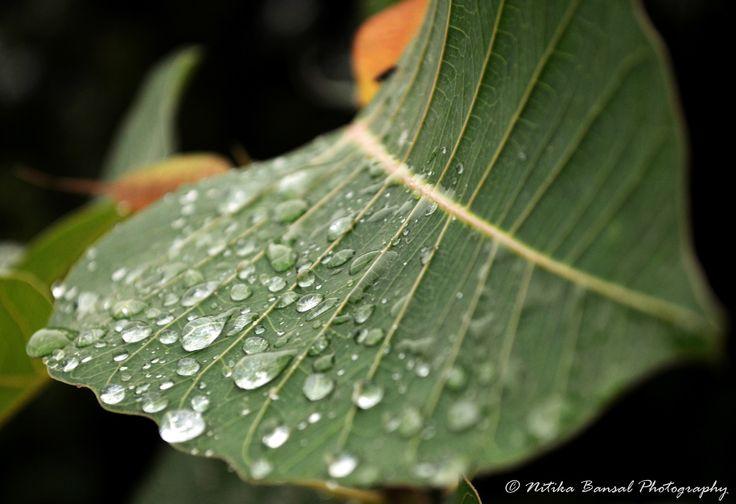Rain Drops on the leaf by Nitika on 500px