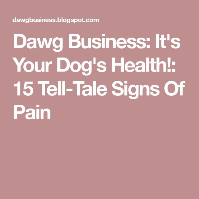Dawg Business: It's Your Dog's Health!: 15 Tell-Tale Signs Of Pain