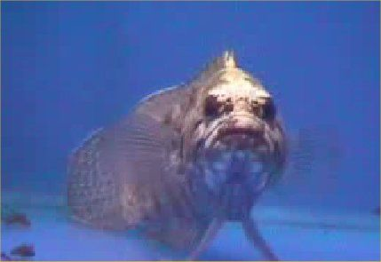 17 best images about something fishy on pinterest the for Weird looking fish