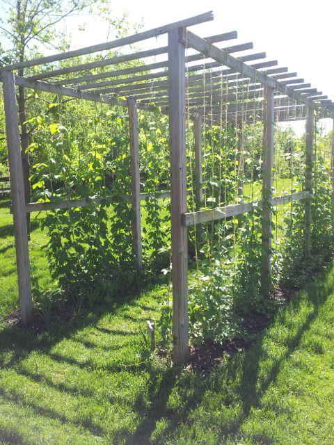 Grand Rapids, MI, Meijer Gardens A rustic arbor growing hops