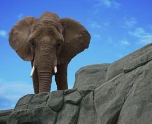 Wildlife in Zambabwe