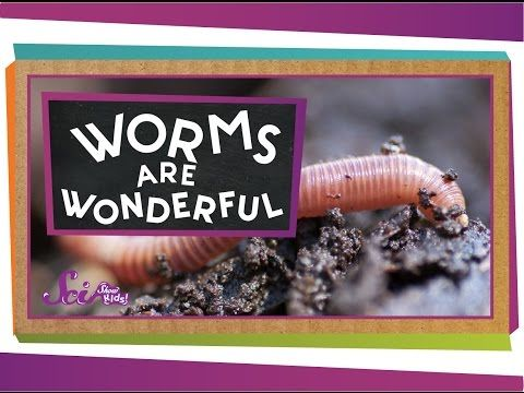 CC Cycle 1, Week 7 Worms Are Wonderful - YouTube