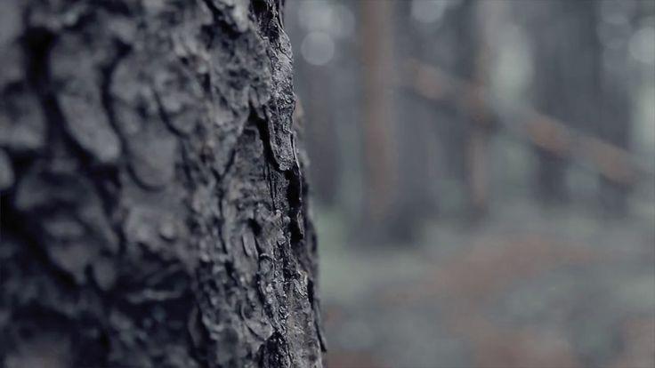 "SAVK ""between the trees"""