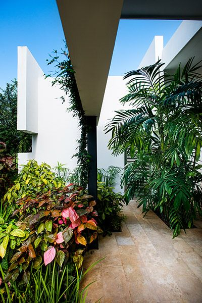 Lush garden in award-winning house in Yucatan, Mexico by Seijo Peon Architects
