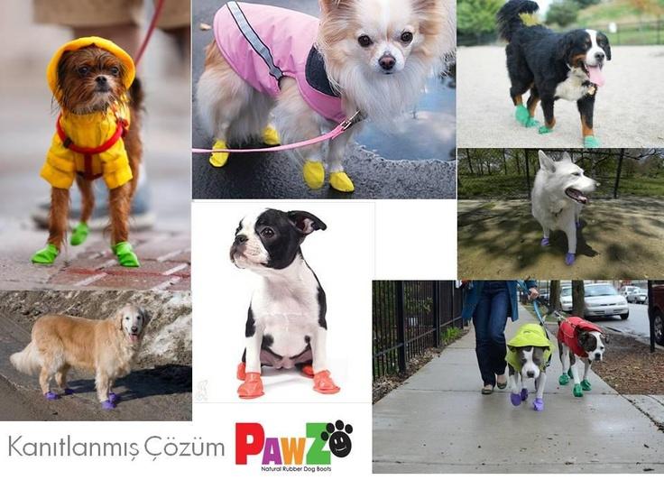Temiz köpekler PAWZ giyer. Mikropları evinize sokmayın !!!  PAWZ dünyanın ilk ve tek, defalarca kullanılabilir, su geçirmez, mikropları eve sokmayan köpek galoşunu yarattı.  http://www.petza.com.tr/PAWZ-Kopek-Galoslari,LA_112-2.html
