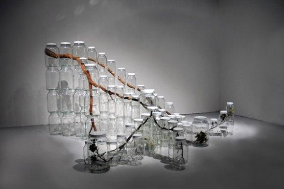 A natureza aprisionada em potes de vidro nas instalações de arte de Naoko Ito