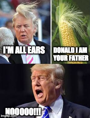 Corny I Know | I'M ALL EARS DONALD I AM YOUR FATHER NOOOOO!!! | image tagged in donald trump,donald trump hair,corn,funny | made w/ Imgflip meme maker