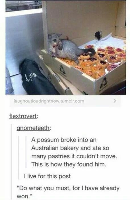 "Awww! Their possums are so CUTE!!!!!! *Stewie Griffin voice* ""It's alright. You are forgiven"""