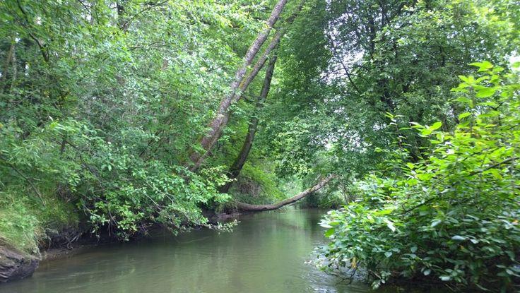 Czech Adventures event - Canoeing through the jungle