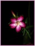 Bookphoto.re - Portfolio flore