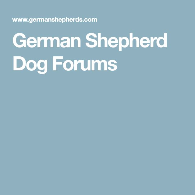German Shepherd Dog Forums