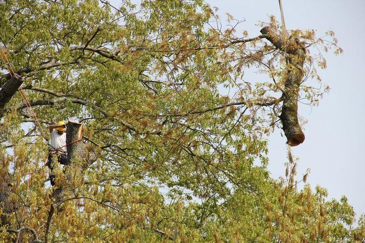 Tree Removal Birmingham, Alabama Eastern Tree Service Inc