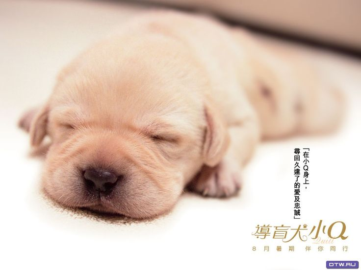 fondos de pantalla de cachorros de perros: http://wallpapic.es/animales/perros/wallpaper-33142
