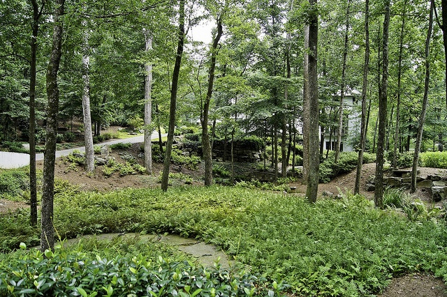 17 Best Images About Woodland Gardens On Pinterest