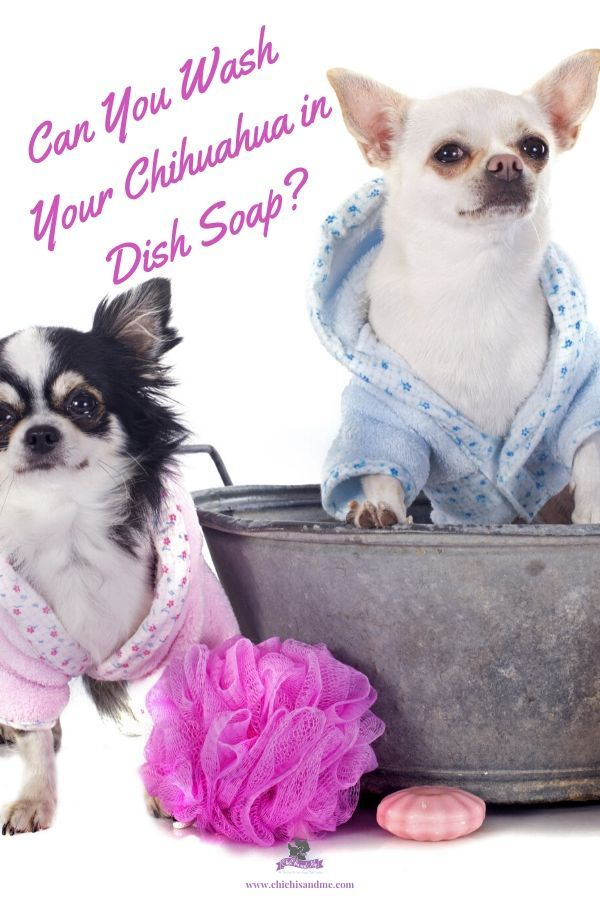 Can You Wash Your Dog With Dawn Dish Detergent Title Dish Soap As Shampoo In 2020 Dish Soap Chihuahua Soap