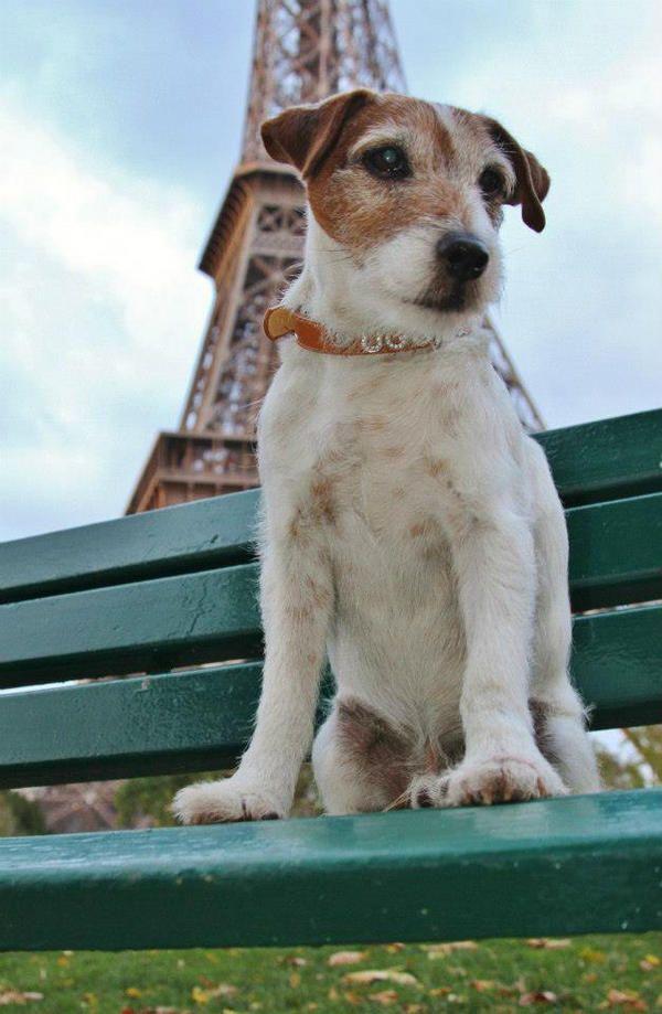 nintendogs jack russell terrier book