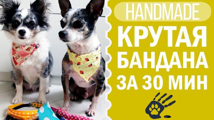 Очень легкая и простая бандана для собаки своими руками! Попробуйте сделать и вы не пожалеете)  https://youtu.be/EtDee-C00SQ https://youtu.be/EtDee-C00SQ https://youtu.be/EtDee-C00SQ  #своимируками #DIY #хендмейд #догмамааня #догмама #чихуахуасофи #чихуаэйван #собаки #собака #одеждадлясобак #чихуа #чихуахуа