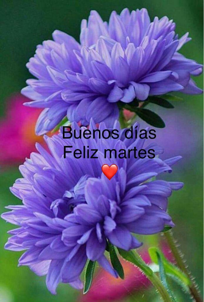 Pin by Mary Olvera on días de la semana | Good morning flowers, Good  morning greetings, Morning greeting