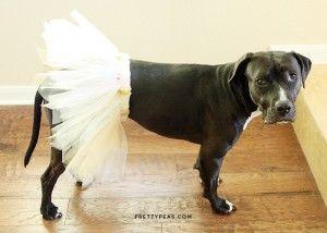 DIY Dog Tutu // a cheap and easy costume!