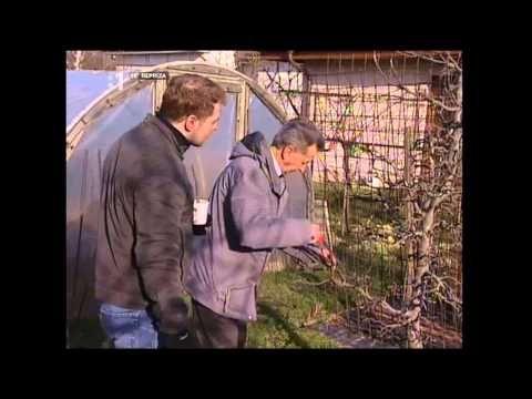 Strih ovocných stromkov jarný - YouTube