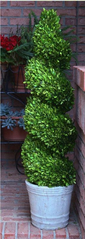 """This 51"""" handmade topiary has a spiral shaped preserved boxwood placed in a whitewashed terra cotta pot.  The boxwood found in our topiaries is real boxwood that has been preserved to maintain a lush green color and offer many years of enjoyment."""