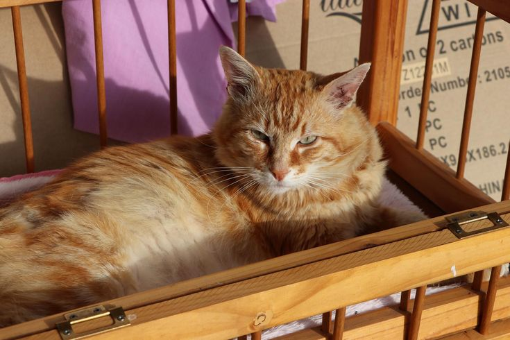 Garfield In The Cot 1 Cats Animals