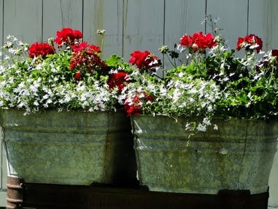 Red Geraniums, white lobelia, and greenery in old wash tubs....lightens my heart.  Simple beauty!