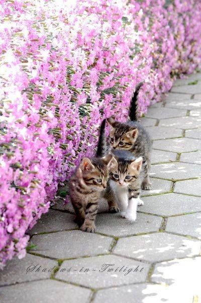 Kittens by the flower bed.