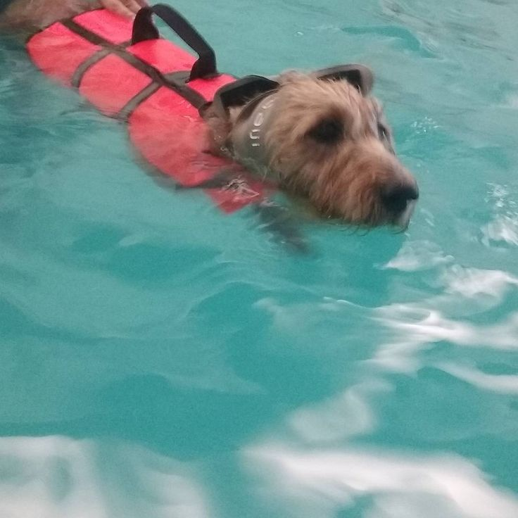 Hidroterapia em piscina www.fisiospa.pt